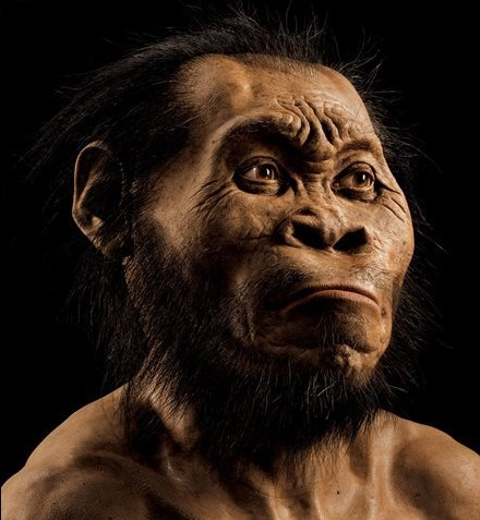 This March 2015 photo provided by National Geographic from their October 2015 issue shows a reconstruction of Homo naledi's face by paleoartist John Gurche at his studio in Trumansburg, N.Y. In an announcement made Thursday, Sept. 10, 2015, scientists say fossils found deep in a South African cave revealed the new member of the human family tree. (Mark Thiessen/National Geographic via AP) IMAGE MUST INCLUDE NATIONAL GEOGRAPHIC LOGO; CROPPING NOT PERMITTED; MANDATORY CREDIT: