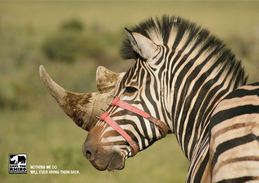 public-social-ads-animals-92