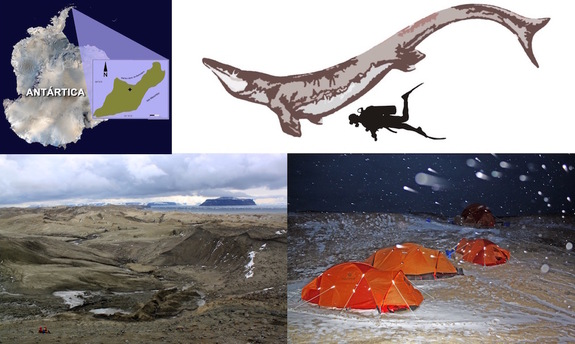 Researchers found the mosasaur <i>Kaikaifilu hervei</i> in Cretaceous-age rocks on Seymour Island in Antarctica (upper left). <i>Kaikaifilu</i> was quite large. See the human for scale (upper right). Paleontologists struggled through Antarctica's extreme climate when they excavated the specimen (lower right). The muddy site where experts found <i>Kaikaifilu</i> (bottom left).